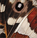Butterfly Wing Paper Luncheon Napkins