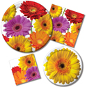 Colorful Daisies Party Supplies